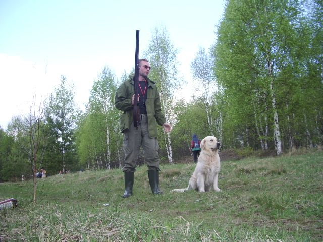 Золотистый ретривер и охота